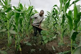 African Farmers Can Feed the World, If Only