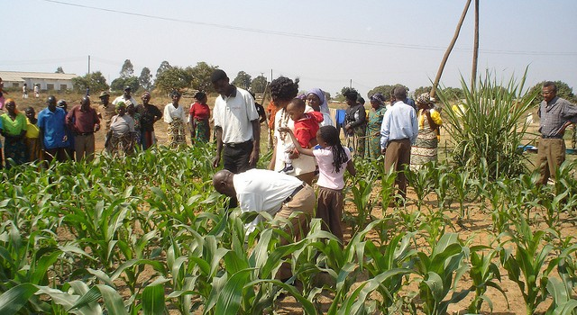African farmers at work. Photo credit: International Institute for Communication and Development