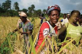 AfDB unveils plan to empower African Women in Agriculture
