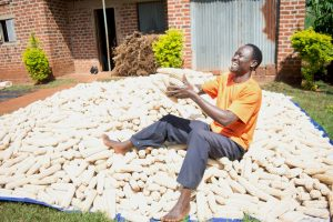 """""""This is the moment I've always dreamt about—becoming the best farmer in my village. I'm very happy,"""" Robert Tigarya says, lifting one large cob after another from his 2015 harvest with One Acre Fund. Robert enrolled for a half-acre's worth of hybrid maize seed and fertilizer on credit from One Acre Fund. For the first time in his farming history, Robert planted hybrid seed and used fertilizer. With his harvest, he was able to feed his family through 2015 and bought a motorcycle to start a business. / Photo by Kelvin Owino"""