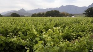 South Africa has some highly fertile land but it is mostly owned by white farmers