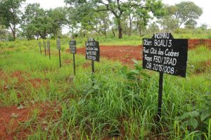 New graves dug on the outskirts of Boali, Central African Republic, for the remains of at least 12 people murdered by Republic of Congo peacekeepers on March 24, 2014. The victims' remains were uncovered in a mass grave near the peacekeeping base in February 2016. © 2016 Lewis Mudge/Human Rights Watch