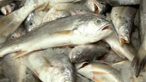 The yellow croaker has reportedly disappeared from Chinese waters