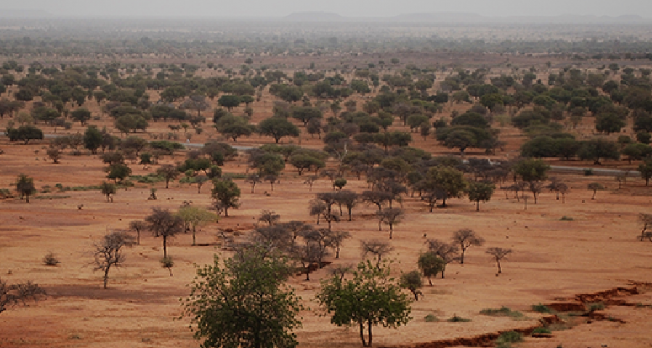 Sahel countries in race against time to regreen Africa's spreading desert