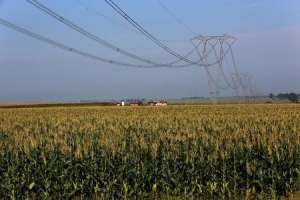 A maize field is seen below electricity pylons in Mpumalanga province, north of Johannesburg, March 1, 2016. REUTERS/Siphiwe Sibeko