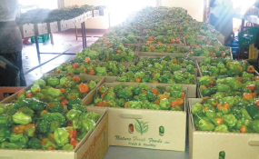 Photo: The New Times Red and green peppers in preshipment sorting (file photo).
