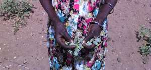 A woman in the commune of Kaymor shows leaves of the leydour plant. Cissokho Lassana/IRIN)