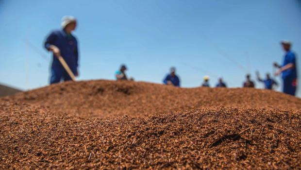 Workers at a Skimmelberg Rooibos tea farm grade and treat Rooibos tea leaves before packaging on Feb. 27, 2017, in Clanwilliam, South Africa.  MUJAHID SAFODIEN/AFP/GETTY IMAGES