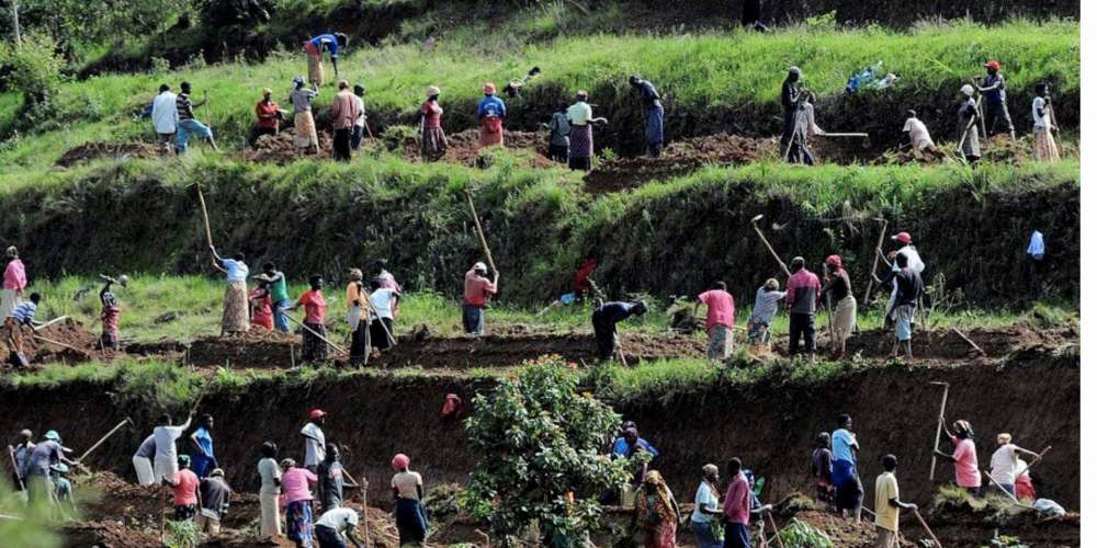 CAN THE BLEAK FUTURE OF AFRICA'S SMALLHOLDER FARMERS BE MADE BRIGHT?