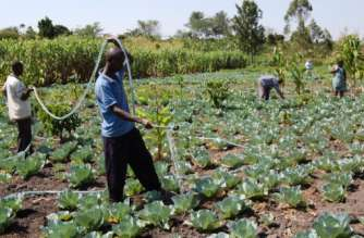 Ghana secures $39m loan to support Planting for Food and Jobs