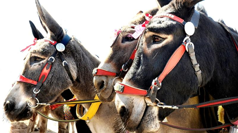 Gabby Bugaga, spokesman for the Senate president, tweeted that the French were 'taking us for donkeys' [Getty]