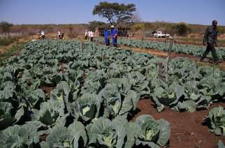 Zimbabwe Hard Hit By Economic Hardships, Poverty And Climate Change Fails To Implement Horticulture Policies As Food Wastage And Loss Continues