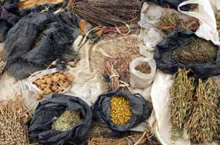 Fresh Look At Traditional Medicine as economic  hardship hits health sector in Zimbabwe