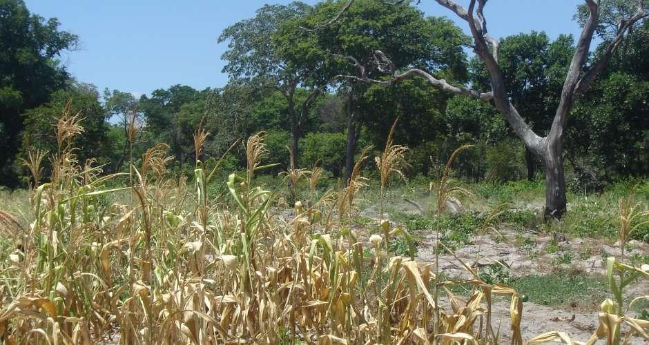 Delayed Rainfall Activity Causes Panic Among Zambian Farmers