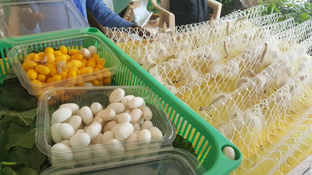 Cocoons in boxes and silkworms next making cocoons during the exhibition in Kayonza District in September, 2017. Photo Mugabo