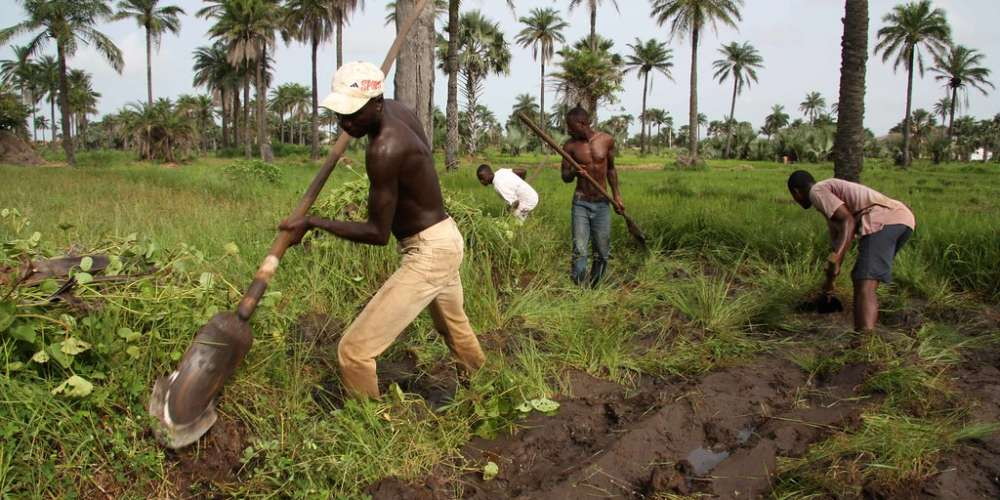 Gambia: Farmers in urgent appeal to government for support
